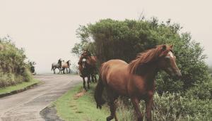Horses - Equine (EquiPure)
