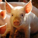 Nidacon Animal Products
